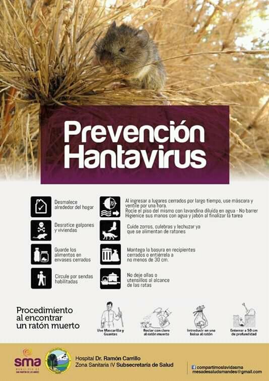 Prevención hantavirus